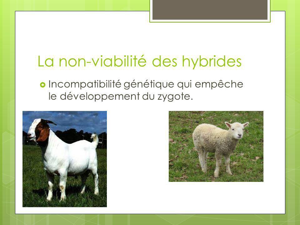 La non-viabilité des hybrides