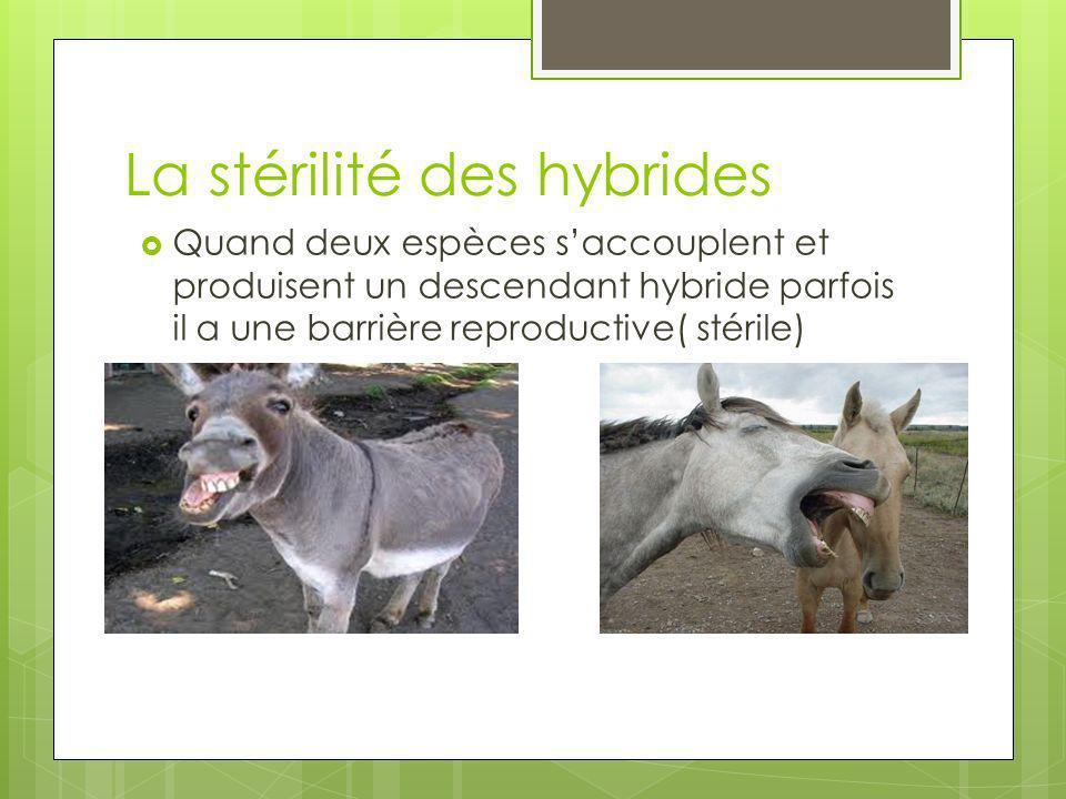 La stérilité des hybrides