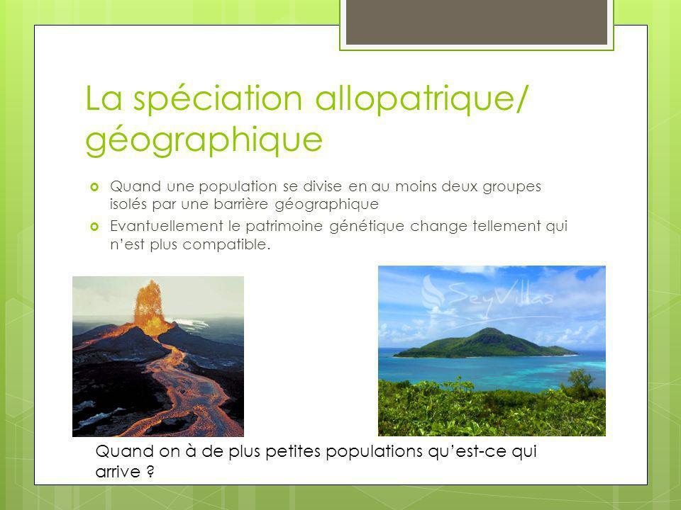 La spéciation allopatrique/ géographique