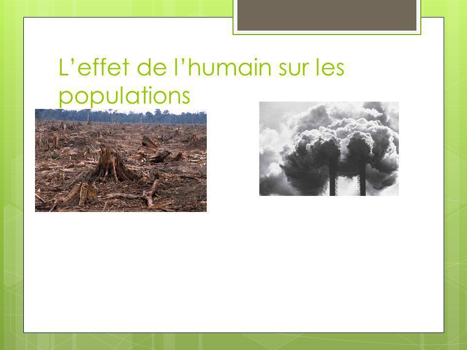 L'effet de l'humain sur les populations