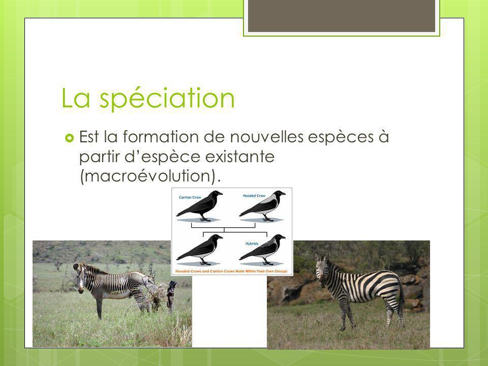 La spéciation Est la formation de nouvelles espèces à partir d'espèce existante (macroévolution).