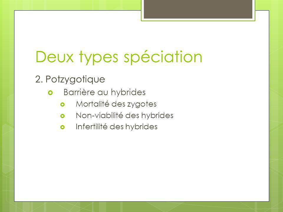 Deux types spéciation 2. Potzygotique Barrière au hybrides