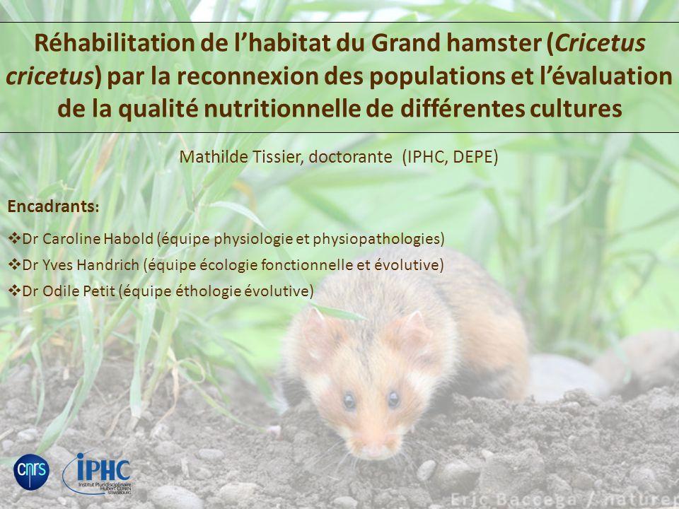 Mathilde Tissier, doctorante (IPHC, DEPE)