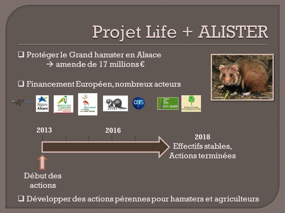 Projet Life + ALISTER Protéger le Grand hamster en Alsace