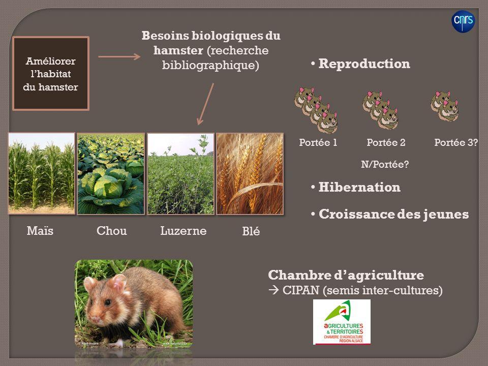 Besoins biologiques du hamster (recherche bibliographique)