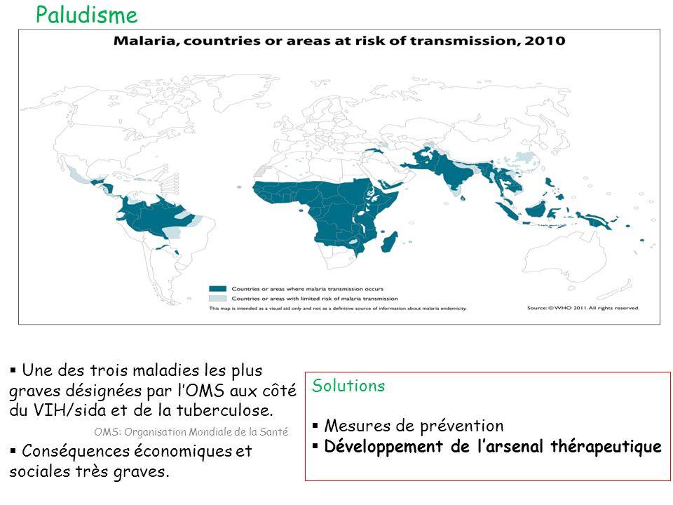 Paludisme Une des trois maladies les plus graves désignées par l'OMS aux côté du VIH/sida et de la tuberculose.