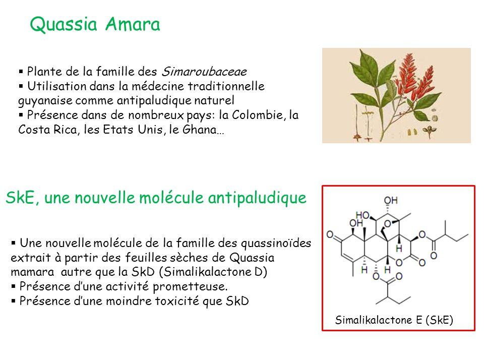 Quassia Amara SkE, une nouvelle molécule antipaludique