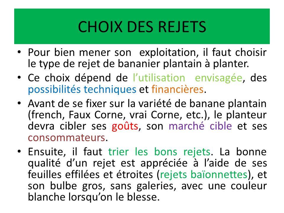 CHOIX DES REJETS Pour bien mener son exploitation, il faut choisir le type de rejet de bananier plantain à planter.