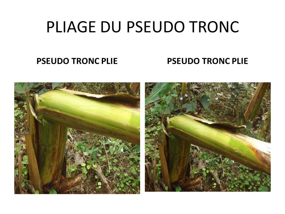 PLIAGE DU PSEUDO TRONC PSEUDO TRONC PLIE PSEUDO TRONC PLIE