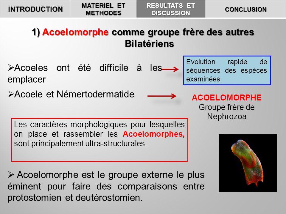 1) Acoelomorphe comme groupe frère des autres Bilatériens