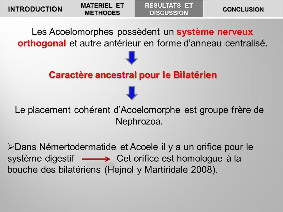 RESULTATS ET DISCUSSION Caractère ancestral pour le Bilatérien