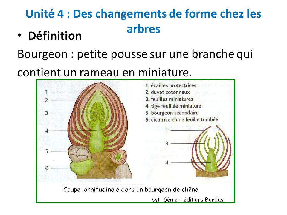 Unité 4 : Des changements de forme chez les arbres