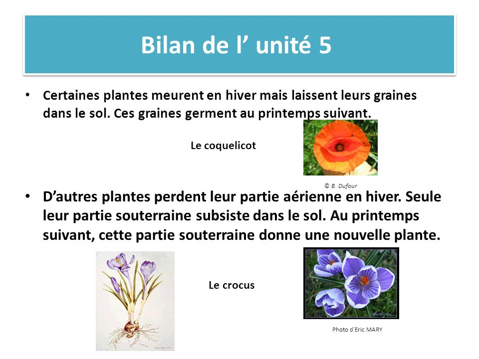 Bilan de l' unité 5 Certaines plantes meurent en hiver mais laissent leurs graines dans le sol. Ces graines germent au printemps suivant.