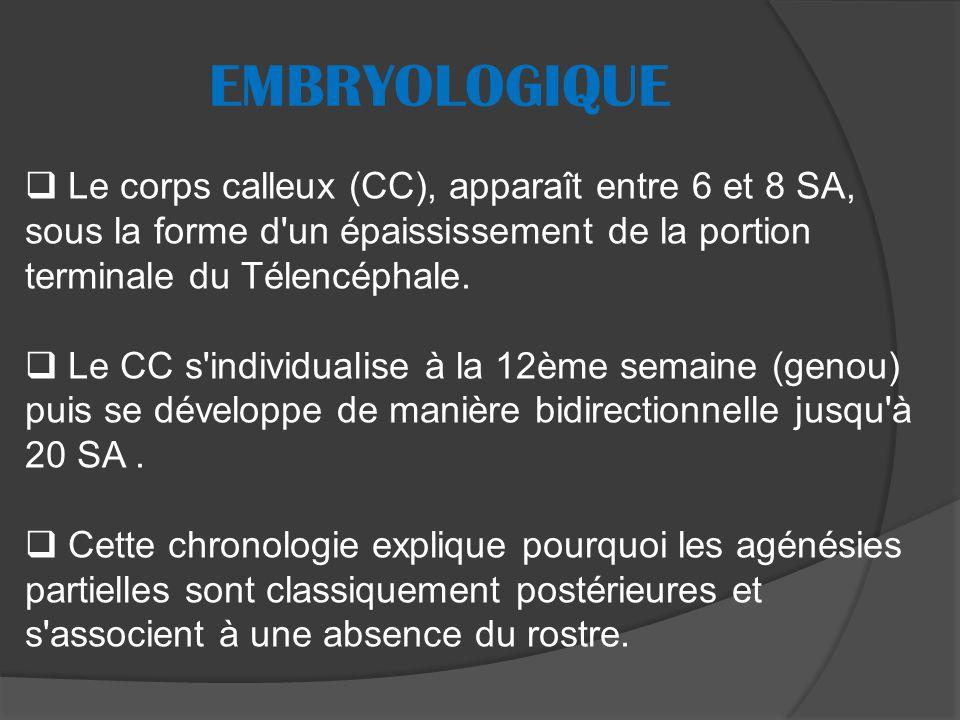 EMBRYOLOGIQUE Le corps calleux (CC), apparaît entre 6 et 8 SA, sous la forme d un épaississement de la portion terminale du Télencéphale.