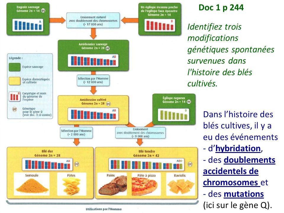 Doc 1 p 244 Identifiez trois modifications génétiques spontanées survenues dans l histoire des blés cultivés.