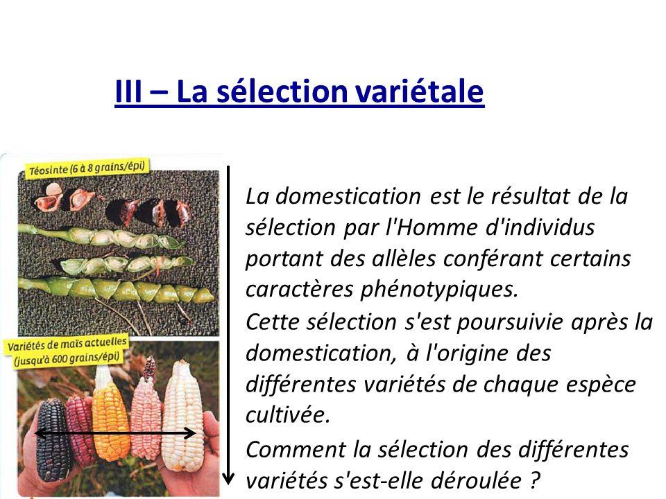 III – La sélection variétale