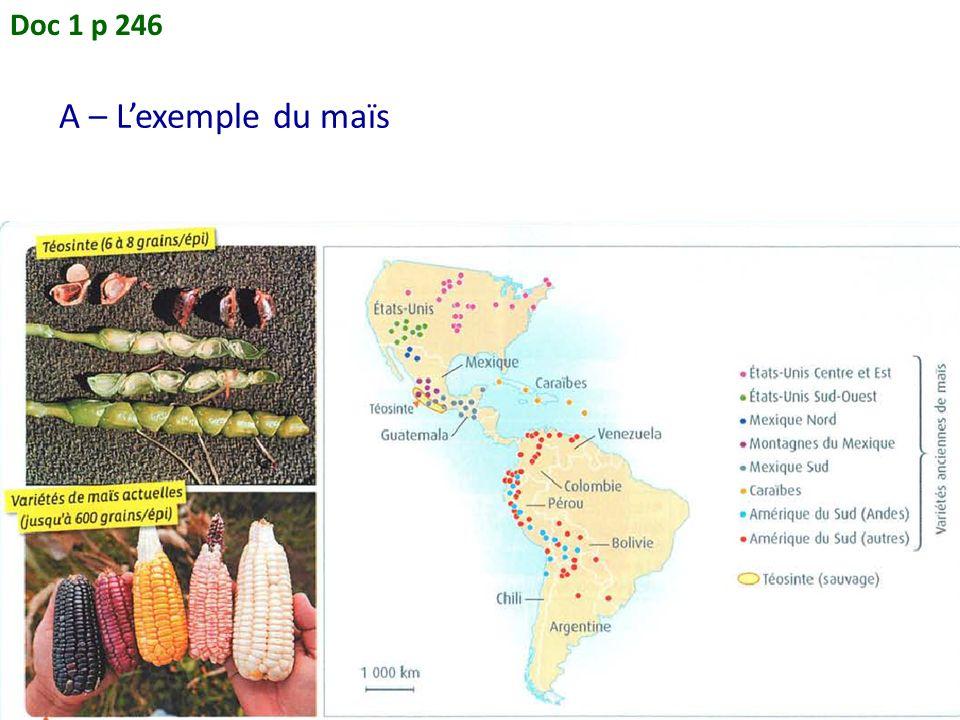 Doc 1 p 246 A – L'exemple du maïs