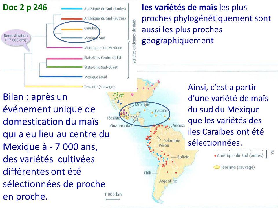 Doc 2 p 246 les variétés de maïs les plus proches phylogénétiquement sont aussi les plus proches géographiquement.