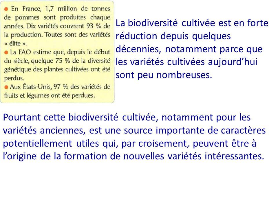 La biodiversité cultivée est en forte réduction depuis quelques décennies, notamment parce que les variétés cultivées aujourd'hui sont peu nombreuses.