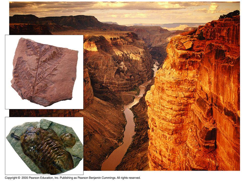 Paléontologie