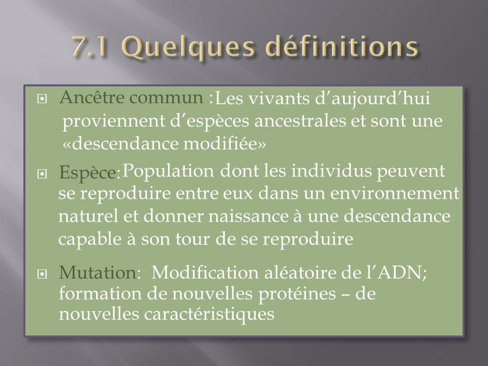 7.1 Quelques définitions Ancêtre commun : Espèce:
