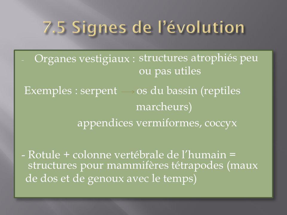 7.5 Signes de l'évolution structures atrophiés peu