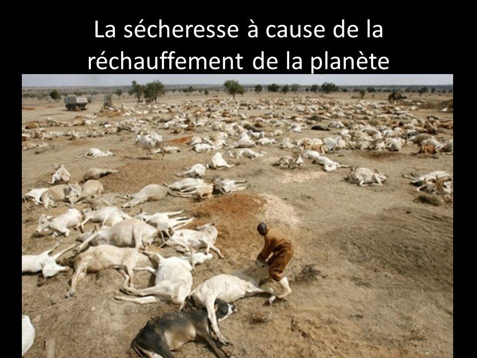 La sécheresse à cause de la réchauffement de la planète