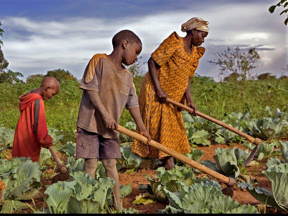 Des agriculteurs