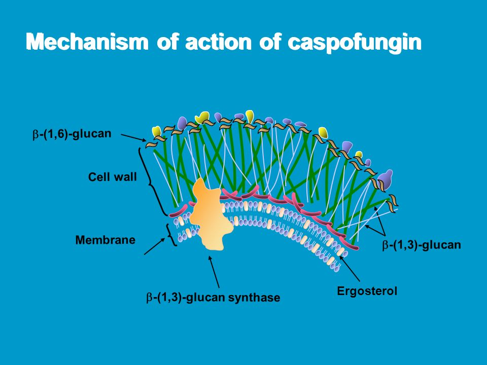 Mechanism of action of caspofungin