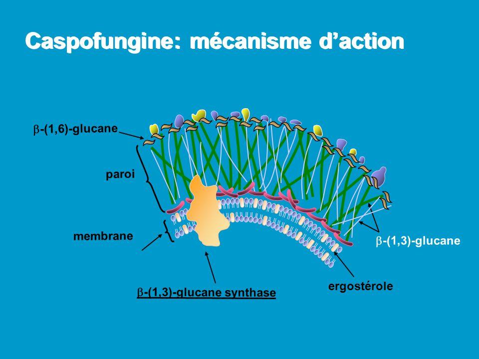 Caspofungine: mécanisme d'action