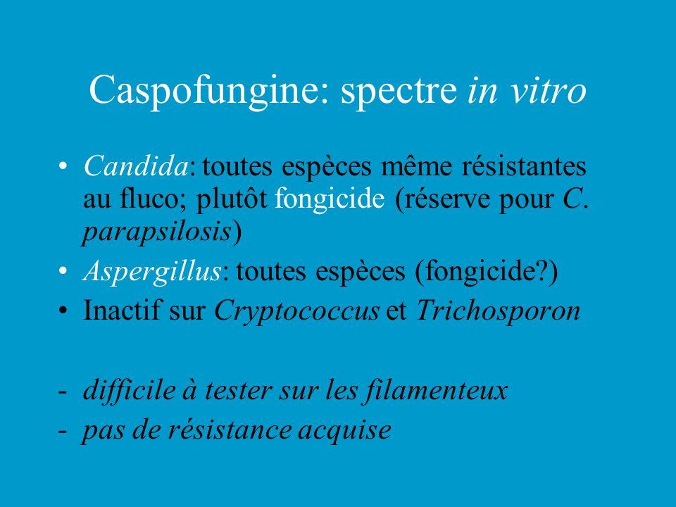 Caspofungine: spectre in vitro