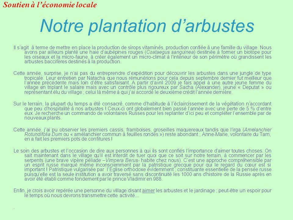 Notre plantation d'arbustes