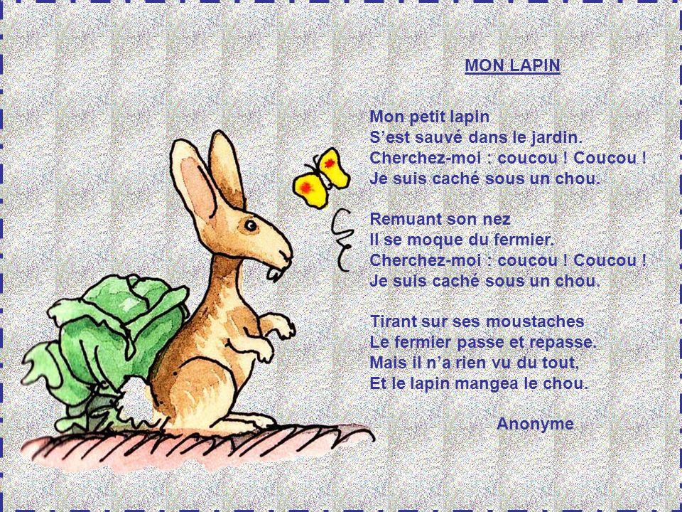 MON LAPIN Mon petit lapin. S'est sauvé dans le jardin. Cherchez-moi : coucou ! Coucou ! Je suis caché sous un chou.