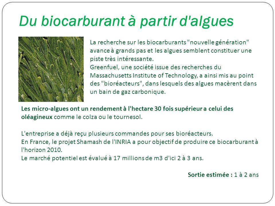 Du biocarburant à partir d algues