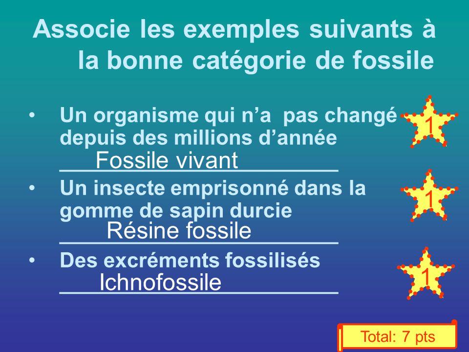 Associe les exemples suivants à la bonne catégorie de fossile