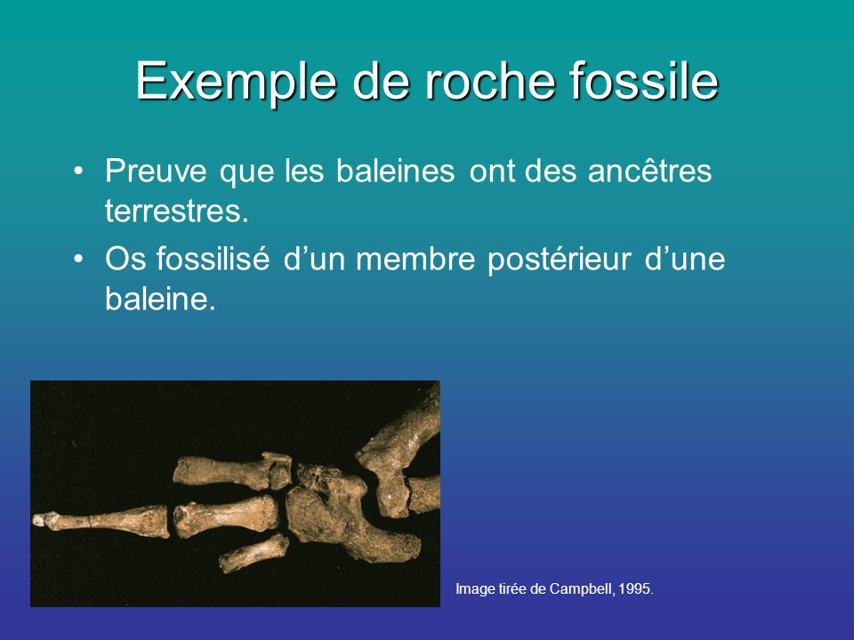 Exemple de roche fossile