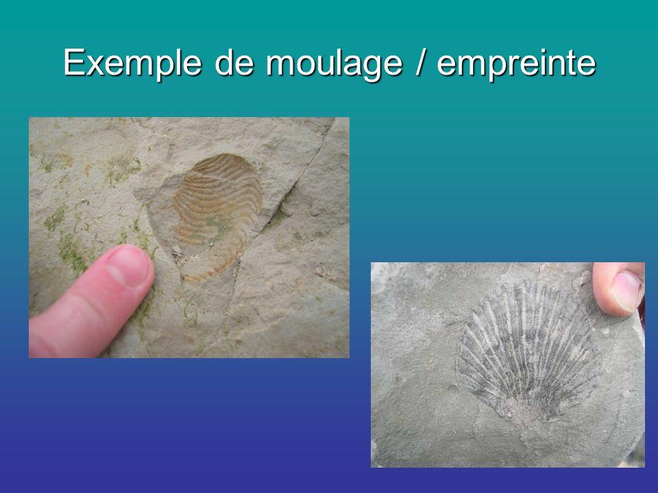 Exemple de moulage / empreinte