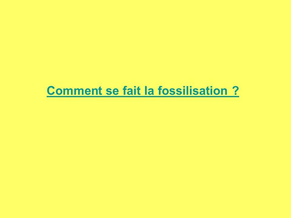 Comment se fait la fossilisation