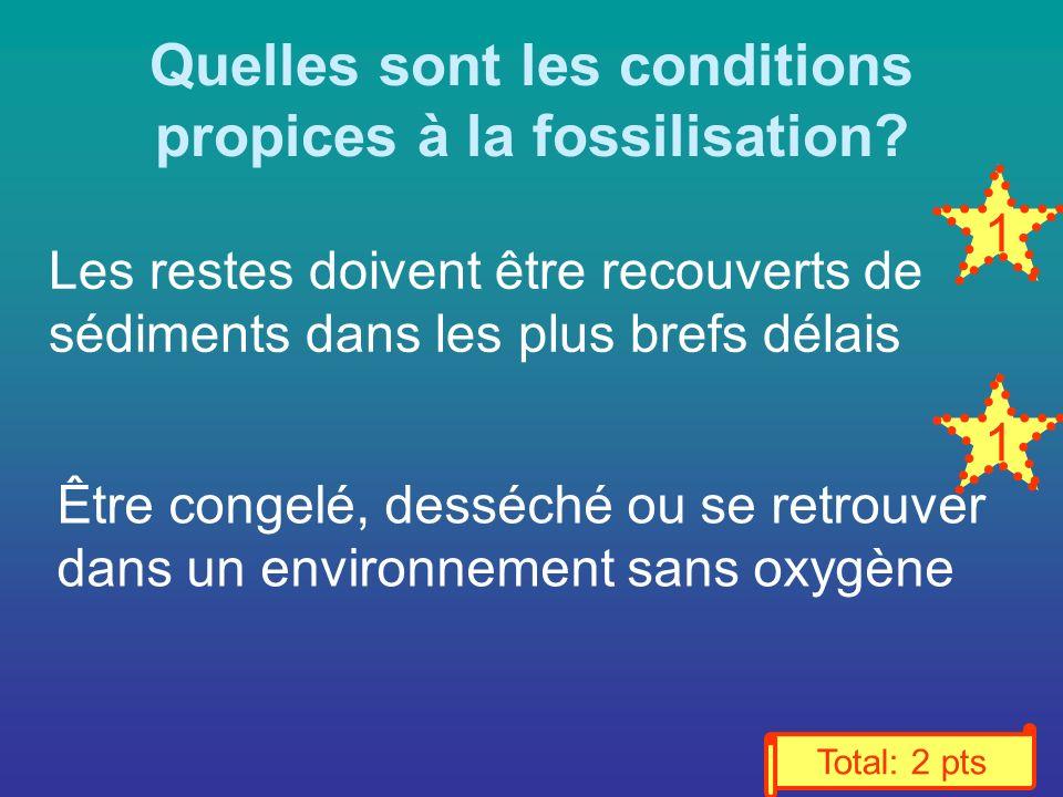 Quelles sont les conditions propices à la fossilisation