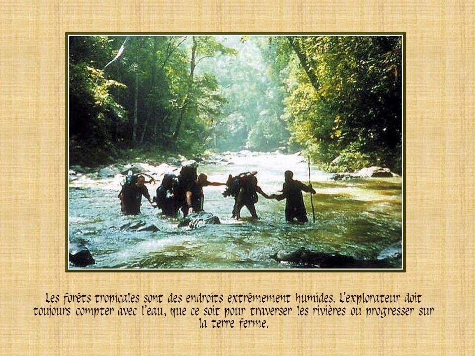 Les forêts tropicales sont des endroits extrêmement humides