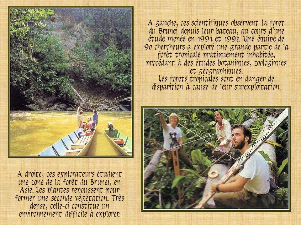 A gauche, ces scientifiques observent la forêt du Brunei depuis leur bateau, au cours d'une étude menée en 1991 et 1992. Une équipe de 90 chercheurs a exploré une grande partie de la forêt tropicale pratiquement inhabitée, procédant à des études botaniques, zoologiques et géographiques.