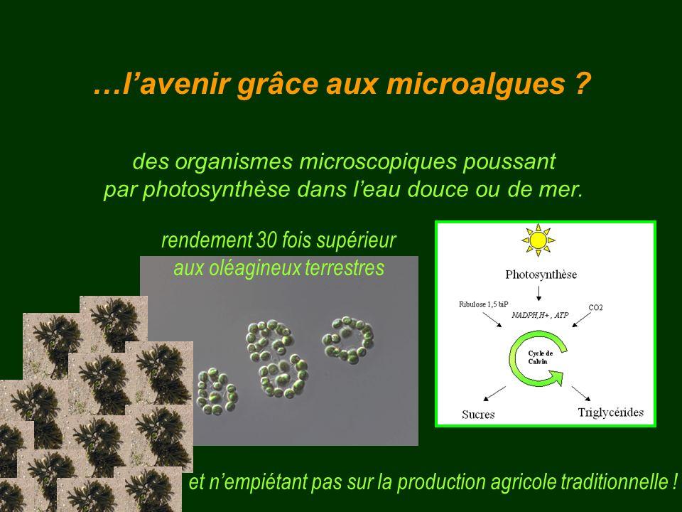 …l'avenir grâce aux microalgues