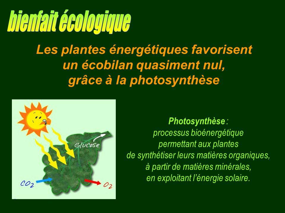 bienfait écologique Les plantes énergétiques favorisent
