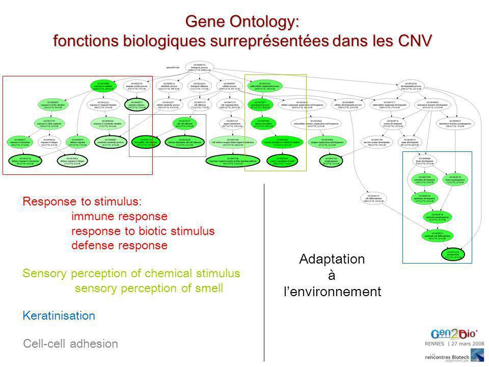 fonctions biologiques surreprésentées dans les CNV