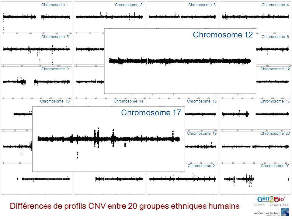 Différences de profils CNV entre 20 groupes ethniques humains