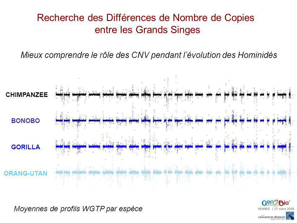 Recherche des Différences de Nombre de Copies entre les Grands Singes