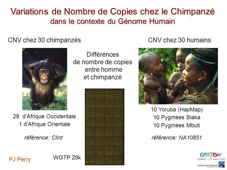Variations de Nombre de Copies chez le Chimpanzé