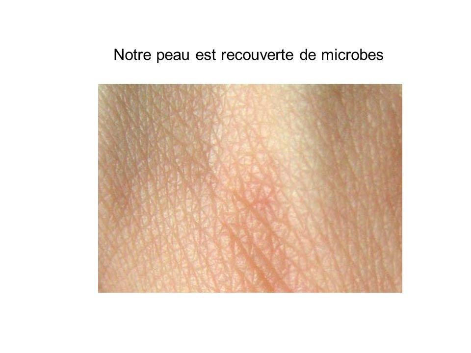 Notre peau est recouverte de microbes