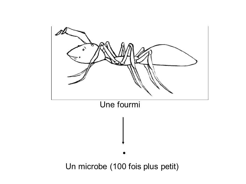 Un microbe (100 fois plus petit)
