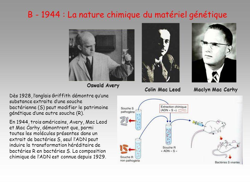 B - 1944 : La nature chimique du matériel génétique